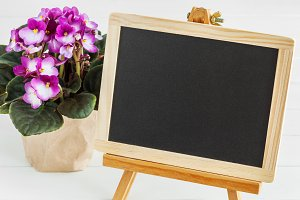 Empty blackboard and violet flower