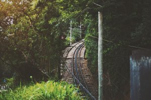 View of railway in jungle forest