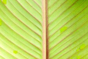 Green plant leaf close up