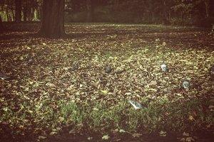 Pigeons on autumn leaves