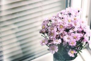 Small Chrysanthemum 1
