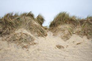 Dune Tufts