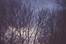Evening Sky in Autumn