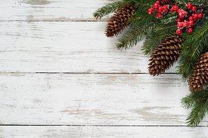 Christmas fir tree branch
