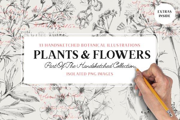 hand drawn botanical