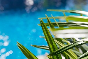 Water surface with green palm leave swimming pool - holiday trop