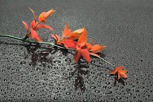 red autumn leaf branch