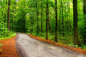 Road in deep moss forest with long trees and yellow leafs. Nature background