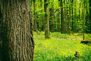 Deep moss forest in summer. Nature background