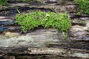 Green nature moss on wood surface. Abstract background.