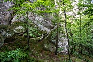 Deep moss forest. Nature background.