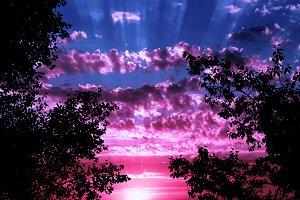 Jungle colorful sunset concept