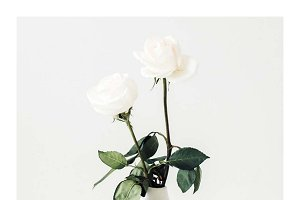 Vertical Lifestyle Image Roses