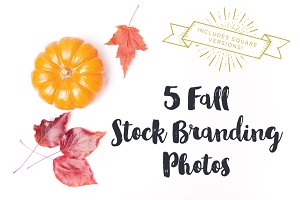 Fall Stock Brand Photos