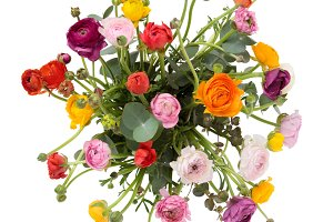 Ranunculus bunch from above