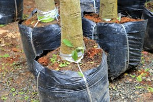 tree planting for garden