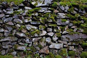 rocks wet full of MOSS