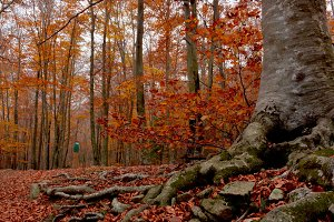 Forest in full season of autumn