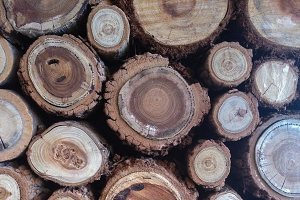Stack of Wood Logs - Texture