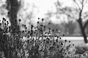 Meadow autumn flowers