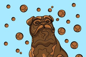 Chocolate bulldog