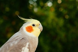 Beautiful bird