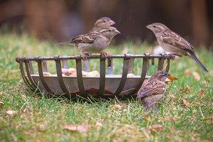 Rain soaked birds