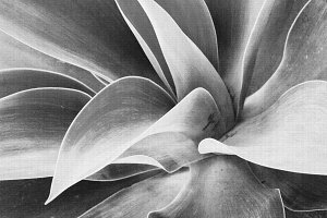 Black & White Cactus Photography