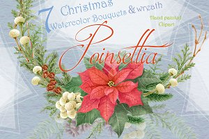 Christmas Star - Poinsettia