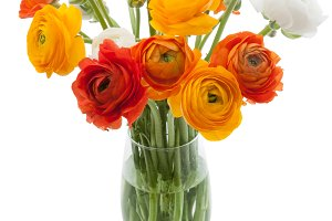 Ranunculus flowers in a vase