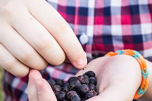 Dark berry in the hands of a teenage girl in a plaid shirt