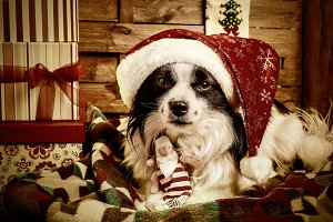 Cute dog with Santa hat, Christmas