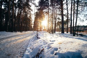 Winter in pine forest with white snow walkway at sunset. Outdoor woods landscape at a cold sunny day.