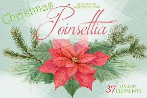 Poinsettia - Christmas Star