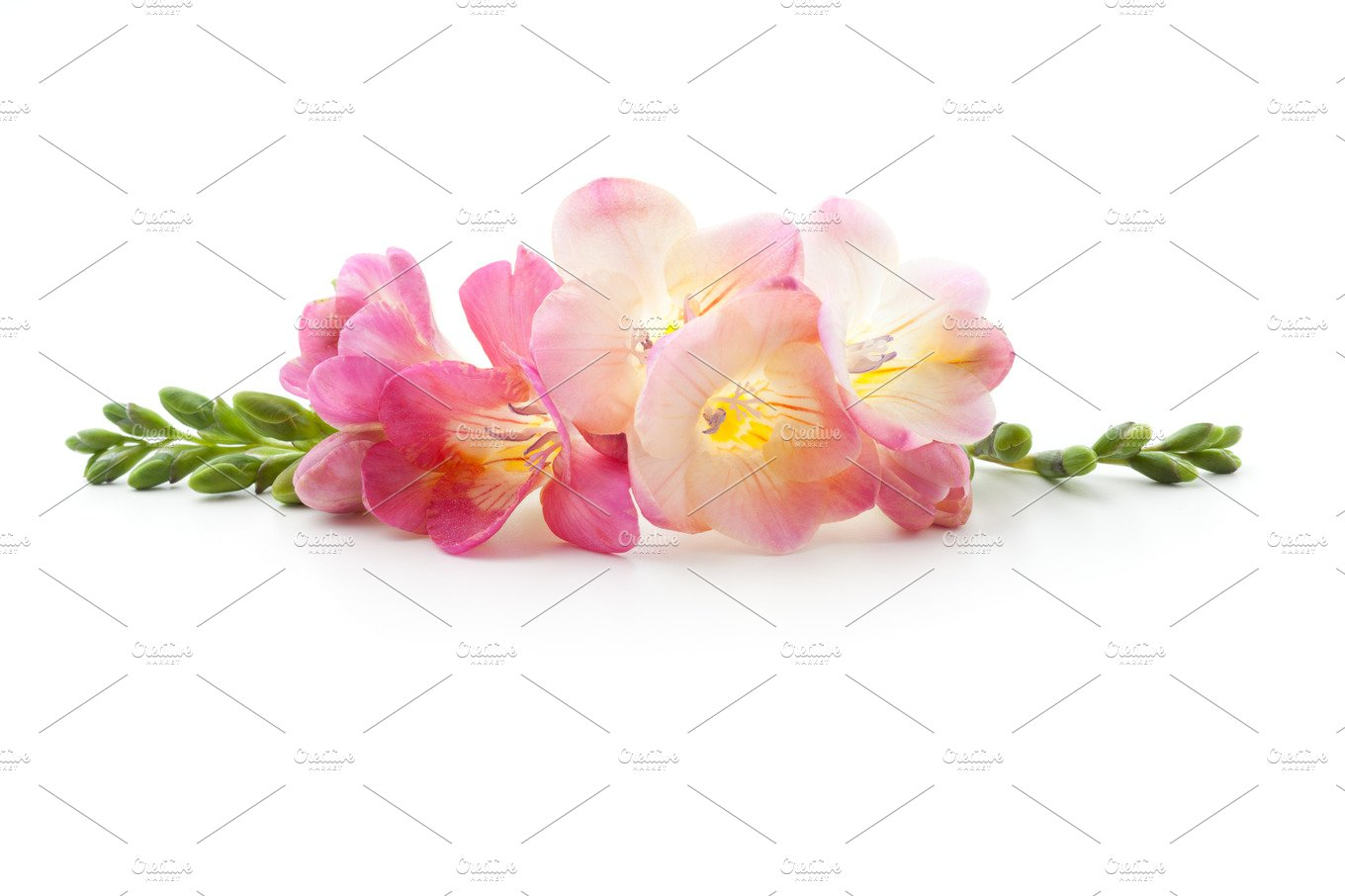 Freesia flowers lying down photos creative market mightylinksfo