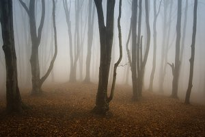 Mysterious autumn forest with fog