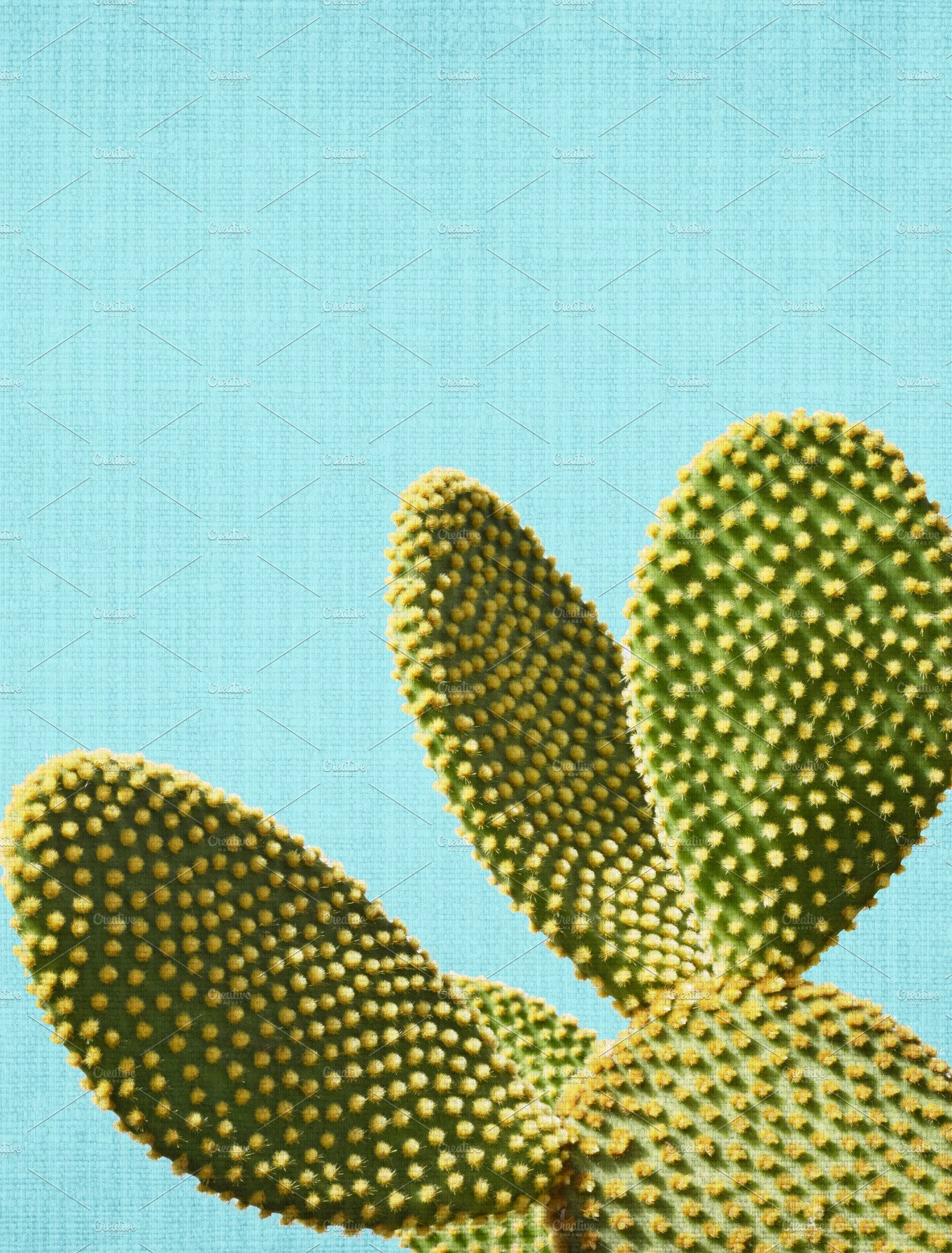 Cactus In Blue Background Nature Photos Creative Market