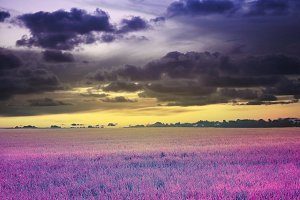 sunset sky and meadow