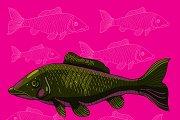 Koi fish in vector