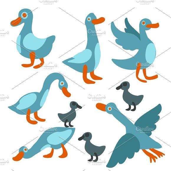 Cute goose set