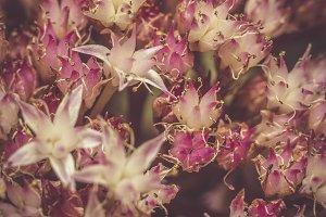 Autumn Flower Macro