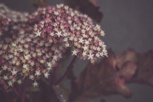 Autumn Flower
