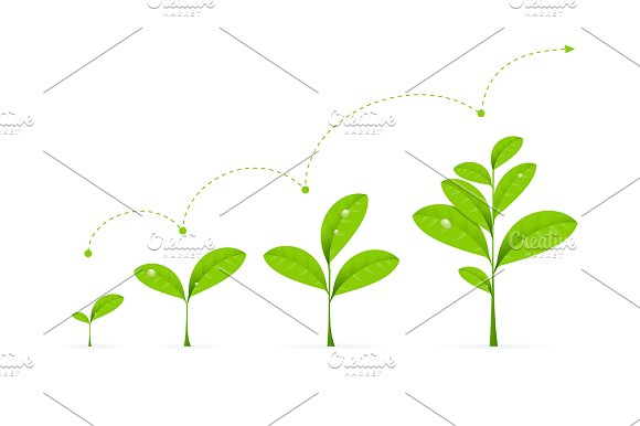 Phases Green Plant Growing.Vector - Illustrations