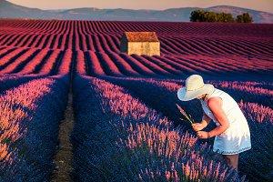 Pretty woman in fields of lavender