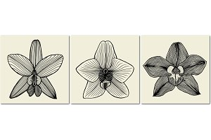 Vector orchid flowers