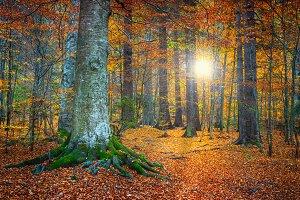Spectacular autumn landscape