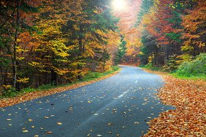 Autumn forest landscape with road