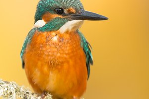 Beautiful kingfisher