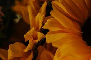Vintage Sunflower