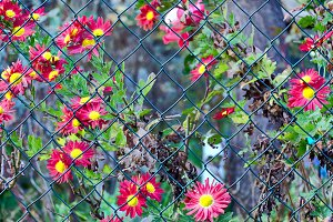 Green wire fence with flowers